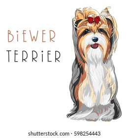Cute funny dog Biewer Yorkshire Terrier breed sitting vector.