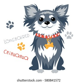 Cute funny dog black longhaired apple head Chihuahua breed sitting vector.