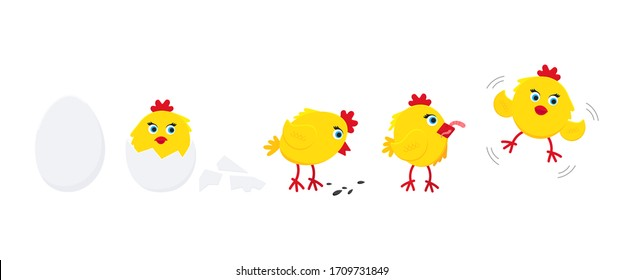 Cute funny little chick chiken hen cartoon flat style design vector illustration set from egg to tiny chick isolated on white background. Funny yellow chicken standing up on the ground.