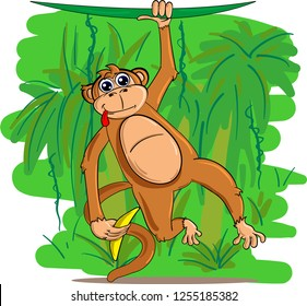 Cute and funny monkey hanging on liana and holding banana in hand on green jungle background.