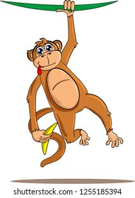Cute and funny monkey hanging on liana and holding banana in hand. Isolated on white background.