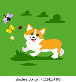 Cute funny puppy running to dragonfly, ladybug and butterfly. The welsh corgi. Vector illustration in cartoon style. Funny character for baby design.