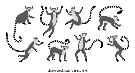 Cute funny ring-tailed lemurs. Exotic Lemur catta. Set of vector illustrations in cartoon and flat style isolated on white background