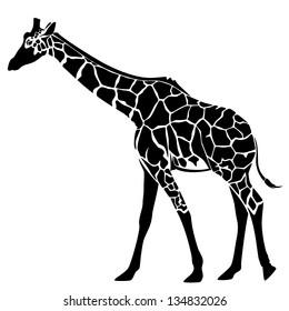 cute giraffe vector illustration - black and white stylized outline of an elegant animal