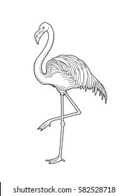 Cute graphic flamingo in the side view. Pretty exotic bird isolated on white background. T-shirt print or tattoo illustration. Coloring book page design for adults