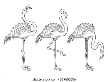 Cute graphic flamingo in the side view. Pretty exotic birds isolated on white background. T-shirt print or tattoo illustration. Coloring book page design for adults