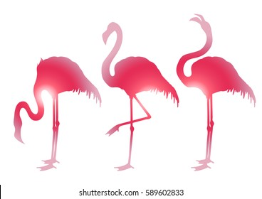 Cute graphic flamingo in the side view. Pretty exotic birds isolated on white background. T-shirt print or tattoo design