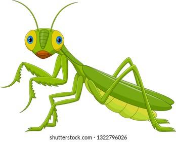 Cute grasshopper cartoon - Green Mantis