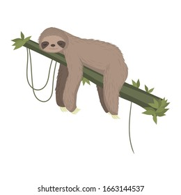 Cute gray sloth sleeping, resting on tree branch isolated on white background