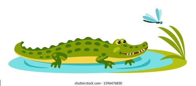 cute green crocodile lies on shallows, smiles and looks at the dragonfly
