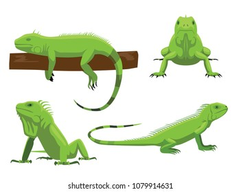 Cute Green Iguana Poses Cartoon Vector Illustration