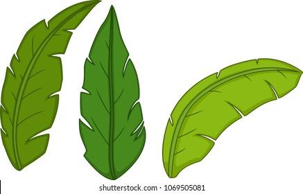 cute green tropical leaves cartoon