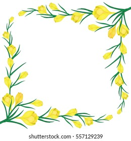 Cute Greeting card with frame for text.The first spring flowers.Vector illustration with  yellow crocuses.