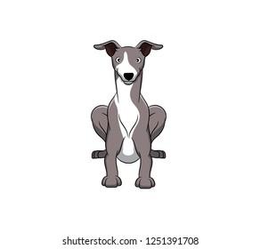 Cute Greyhound Cartoon Dog. Vector illustration of purebred greyhound dog.