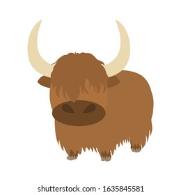 Cute hairy cattle or calf isolated on white background.  Cartoon Tibetan Yak, Scottish highland cattle or kyloe. Childish vector illustration. Great for icon, symbol, children's book design.