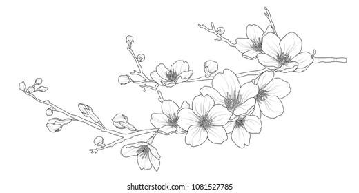 桜 イラスト 花びらのイラスト素材画像ベクター画像 Shutterstock