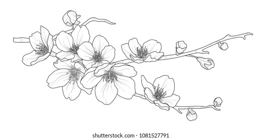 Cute hand drawn isolated sakura branch set 2. Flower vector illustration in black outline and white plane on white background.