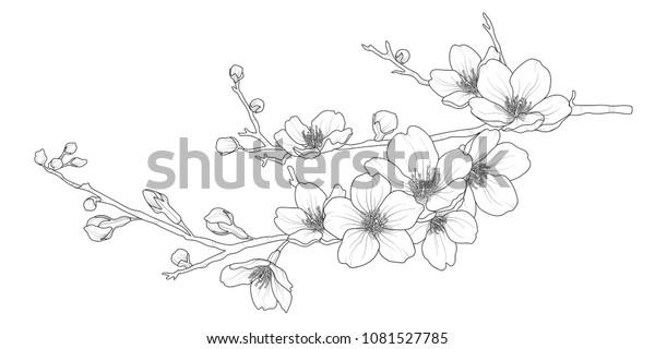 Симпатичные руки обращается изолированный сакура филиал набор 1. Цветочный векторный рисунок в черном контуре и белая плоскость на белом фоне.