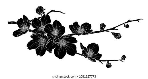 Cute hand drawn silhouette sakura branch set 2. Flower vector illustration in white outline and black plane on white background.