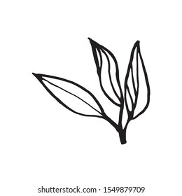 Cute hand drawn single leaf of sakura element. Traditional japanese or chinese spring flower in ink style. Doodle cherry plant.