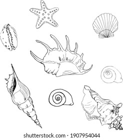 Cute hand drawn vector illustration. Elements for greeting cards, posters, stickers and seasonal design. Isolated on white background.  Shells and whales