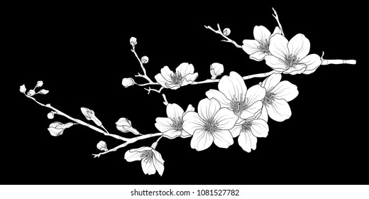 Cute hand drawn white silhouette sakura branch set 1. Flower vector illustration in white plane without outline on black background.