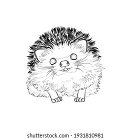 Cute hedgehog. Line drawing. Black and white illustration. Vector.