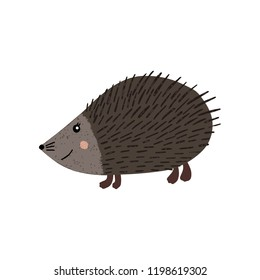 cute hedgehog, vector illustration isolated on white background