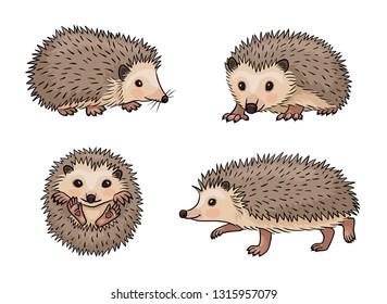 Cute hedgehogs. Vector illustration. EPS8