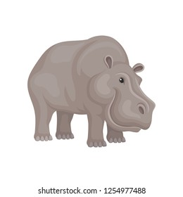 Cute hippo standing isolated on white background. Wild African animal with gray skin. Wildlife theme. Flat vector icon