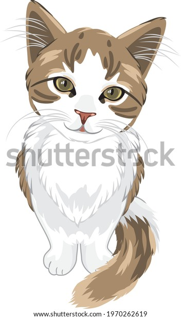 cute-kitten-isolated-on-white-600w-19702