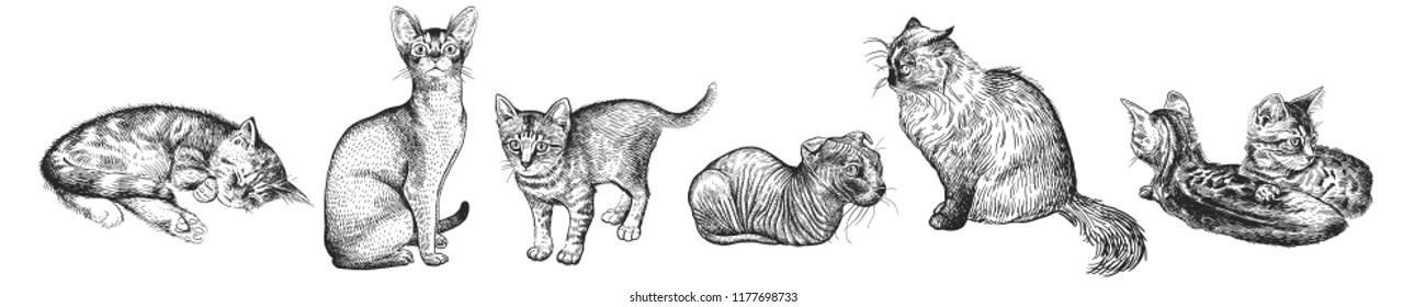 Cute kittens set. Home pets isolated on white background. Sketch. Vector illustration art. Realistic portraits of animal. Vintage. Black and white hand drawing of cats.
