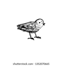 Cute little chick hand drawn vintage symbol of Happy Easter, vector ink sketch illustration isolated on white, cartoon cub bird farm animal, Character design for baby shower, greeting spring card