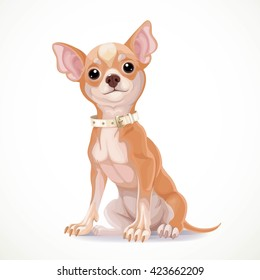 Cute little chihuahua dog wearing a collar sit on white