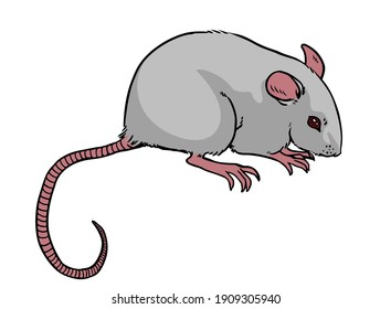 Cute little mouse. Vector illustration isolated on white background