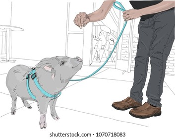 Potbellied Pigs Images Stock Photos Vectors Shutterstock