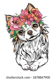 Cute long-haired chihuahua girl wearing a flower wreath. Portrait of a small dog. Spring composition for printing on any surface