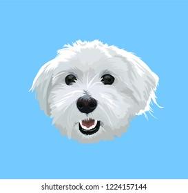 Cute Maltese dog portrait. Vector illustration for print.