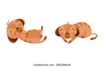 Cute Meerkat or Suricate with Brindled Coat Lying and Sleeping Vector Set