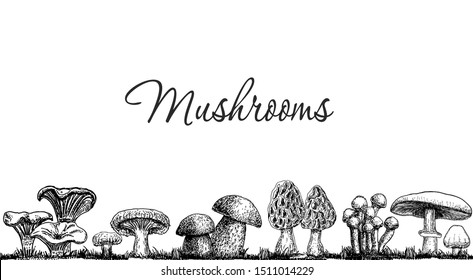 Cute mushrooms border, hand drawn collection. Isolated Sketch organic food drawing template. Champignon, morel,  porcini, chanterelle. Great for menu, label, product packaging