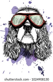 Cute muzzle of a dog breed of cocker spaniel in the glasses of a tankman. Portrait of a dog. Vector illustration. Print on the T-shirt.
