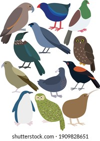 Cute New Zealand Birds Illustrated Vector - Set of 12