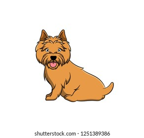 Cute Norwich Terrier Cartoon Dog. Vector illustration of purebred norwich terrier dog.