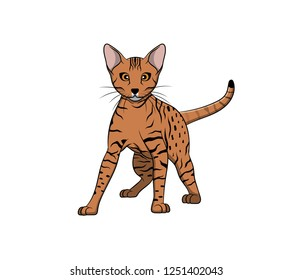 Cute Ocicat Cartoon Cat. Vector illustration of purebred ocicat cat.