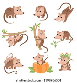 Cute Opossums Animals in Various Poses Set, Adorable Wild Animals Cartoon Characters Vector Illustration