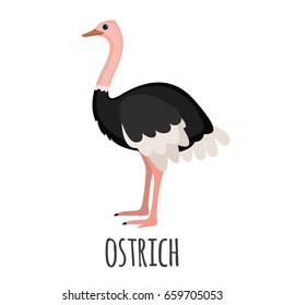 Cute Ostrich in flat style isolated on white background. Vector illustration. Cartoon ostrich. African zoo animal.