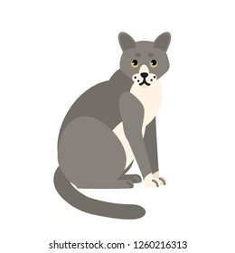 Cute pensive grey cat isolated on white background. Funny domestic animal or pet. Adorable sitting kitty or pussycat, lovely furry friend. Colorful vector illustration in flat cartoon style.