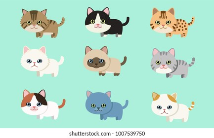 Cute pet cat breed collection flat style