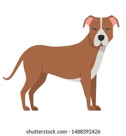 cute pitbull dog on white background