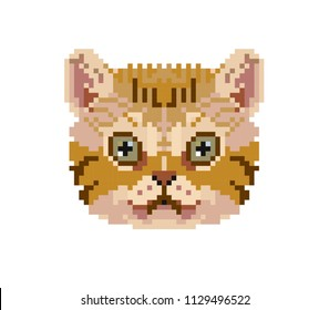 Cute pixel kitty